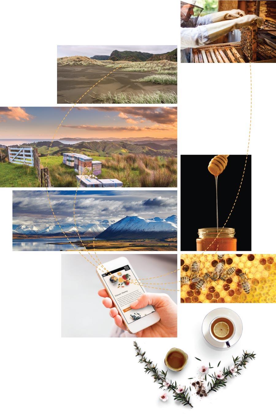 Pure-NZ-Honey-web-Layup2